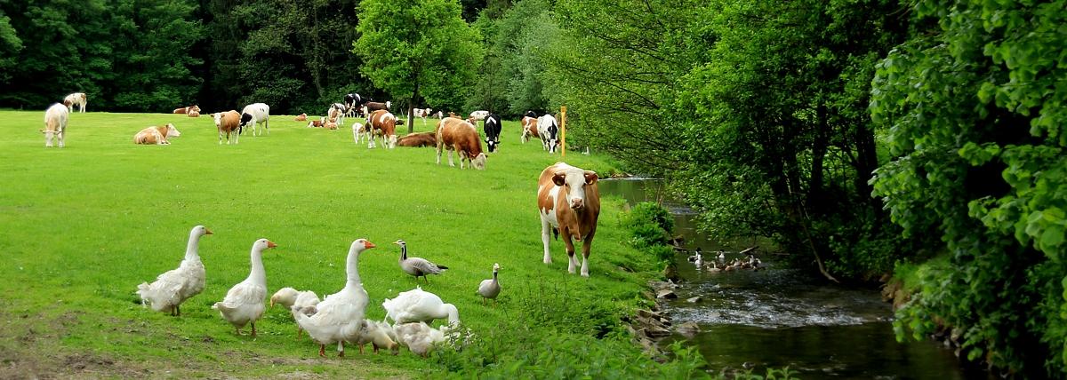 Verkauf von Gänsen,  Rind- & Kalbfleisch