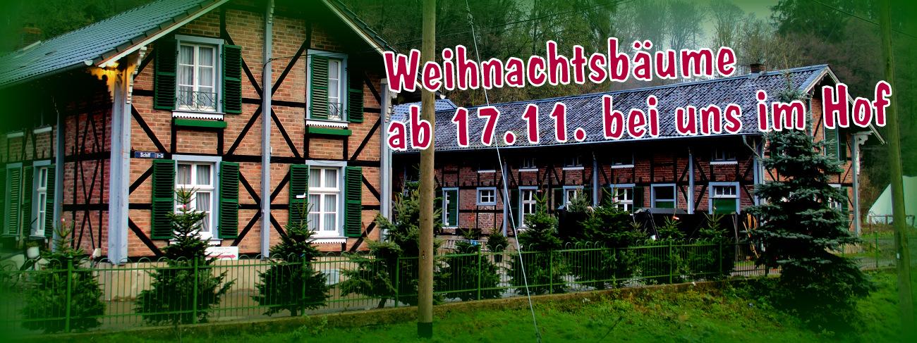 Weihnachtsbäume Tannenbäume Christbäume Verkauf Gut Schiff herrenstrunden Bergisch Gladbach Nordmanntannen Fichten Blaufichten Fichte im Topf
