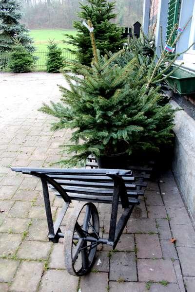 Gut Schiff Weihnachtsbäume