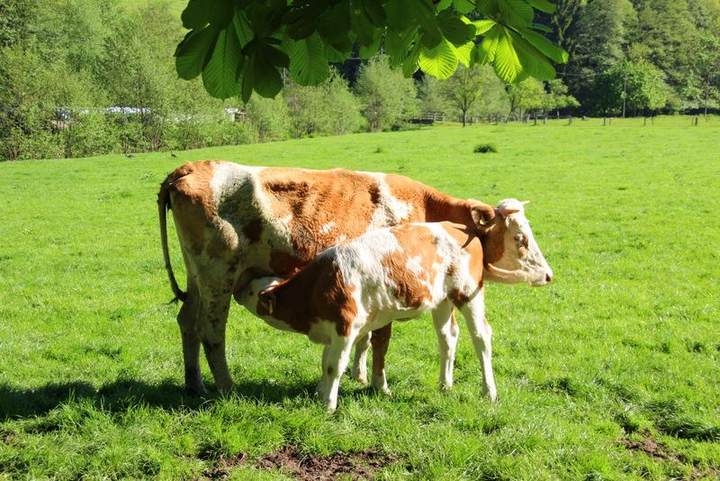 Ernährung mit Muttermilch & Gras