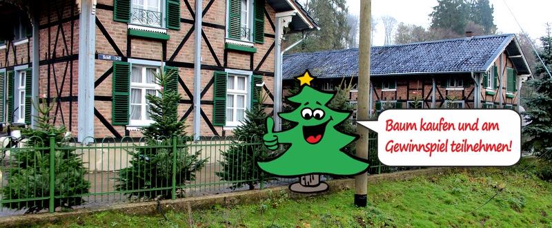 Jetzt gestartet: Großer Weihnachtsbaumverkauf